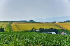 BIei rolnictwa teren zdjęcie royalty free