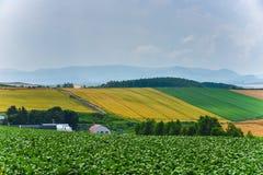 BIei rolnictwa teren obraz royalty free