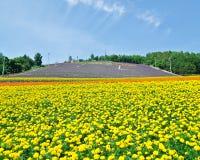 bieifält blommar furanohokkaido japan Royaltyfria Bilder
