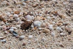 Biel łuska z kamieniami, skałami/, piaski, mali kawałki drewno zdjęcia stock
