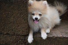 Biel ściana i pies zdjęcie stock