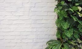 Biel ściana z cegieł i zieleń leaf dla tła Fotografia Stock