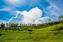 Biel chmura w niebieskim niebie z zieloną trawą Zdjęcie Stock