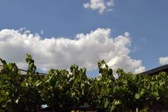 Biel chmurnieje na dachu Zdjęcia Royalty Free