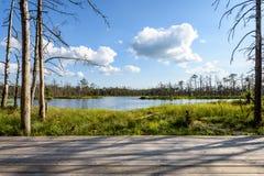 Biel chmurnieje na niebieskim niebie nad lasowym jeziorem Fotografia Stock