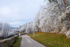 Biel frosted drzewa na żółtej trawie Zdjęcie Stock