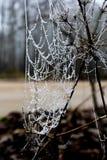 Biel frosted pajęczyny obrazy royalty free