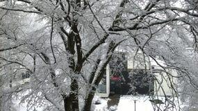 Biel jako śnieg Obrazy Royalty Free
