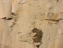 Biel kursuje drewno dla tła Obrazy Stock