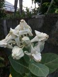 biel kwiaty obraz royalty free