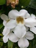 biel kwiaty obrazy stock