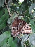 biel motyla odosobniony biel Obraz Royalty Free