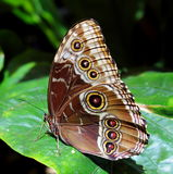 biel motyla odosobniony biel fotografia royalty free