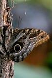 biel motyla odosobniony biel Zdjęcia Stock