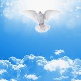 Biel nurkujący w niebach Zdjęcia Royalty Free