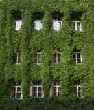 Biel obramiający okno w zielonym tle zdjęcie stock