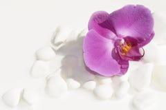 Biel orchidea i kamienie Obrazy Royalty Free