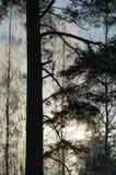 Biel oszroniejący na drzewie przy pogodnym finnish zima dniem Zdjęcia Royalty Free
