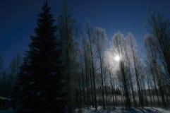 Biel oszroniejący na drzewie przy pogodnym finnish zima dniem Zdjęcia Stock