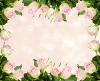Biel róży kwiatów bokeh i rama Obrazy Royalty Free