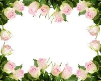 Biel róży kwiatów rama Zdjęcia Stock