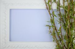 Biel rama z gałąź zielona wierzba na błękitnym tle Odbitkowa przestrze? w ?rodku dla tw?j teksta zdjęcia stock