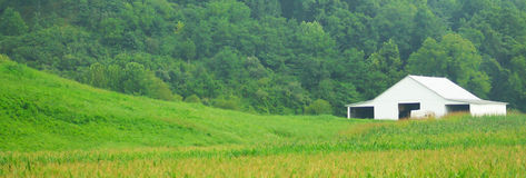 Biel rolna i zielona trawa Obraz Stock
