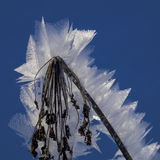 Biel w błękicie Fotografia Royalty Free