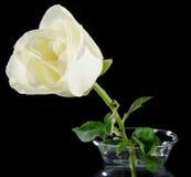 Biel wzrastał w szklanej wazie Zdjęcie Royalty Free