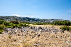 Biel zakorzenia, sposób dziura, Serra da Estrela, Portugalia Obrazy Stock