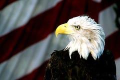 bielik amerykański fotografia stock