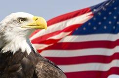 bielik amerykański Fotografia Royalty Free