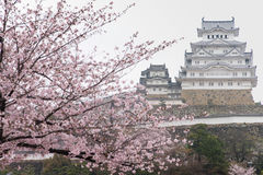 Bielu Himeji Grodowy kasztel w Czereśniowego okwitnięcia kwiacie w przedpolu Fotografia Stock