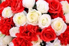 Bielu i czerwieni róży kwiatów tła tekstura Obrazy Stock
