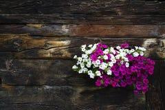Bielu i fiołka kwiaty zakrywa okno drewniana beli kabina obrazy stock