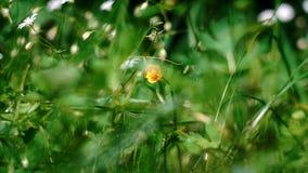 Bielu i koloru żółtego pola kwiaty zbiory wideo