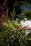 Bielu i zieleni kwiaty Zdjęcia Stock