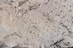 Bielu kamienny naturalny wzór Obrazy Stock