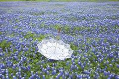 Bielu koronkowy parasol do góry nogami w polu Teksas bluebonnets Obraz Stock