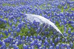 Bielu koronkowy parasol w polu Teksas bluebonnets Obrazy Royalty Free