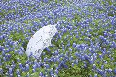 Bielu koronkowy parasol w polu Teksas bluebonnets Zdjęcia Stock