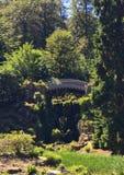 Bielu most w lesie zdjęcie royalty free