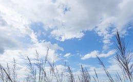 Bielu niebieskie niebo i chmura trawy przedpole obrazy stock