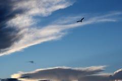 Bielu Obłoczny i Latający ptak Zdjęcia Royalty Free
