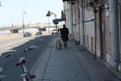 Bielu pies z dreadlocks obrazy stock