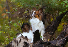 Bielu psi obsiadanie na palącym drzewie Ogień w lesie Zdjęcia Stock