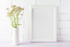 Bielu ramowy mockup z śmietankowymi menchiami kwitnie w butli wazie Fotografia Stock