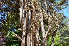 Bien allumé aléatoire d'arbre mignon mignon Image libre de droits