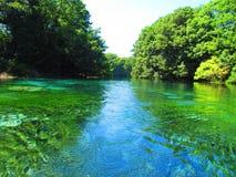 Bien du Drin noir, Ohrid, Macédoine Images libres de droits