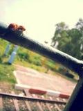 Biene über Stange stockfotos